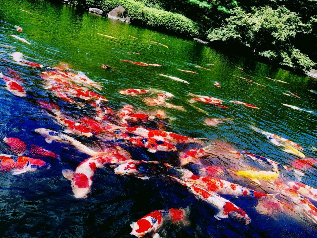 Tokyo Happoen Gardens